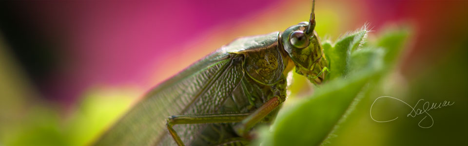 Grasshopper by Dagmar