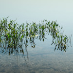 JereWILLIAMSWatergrass